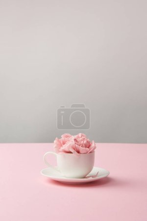 Photo for Beautiful pink carnation flowers in white cup and saucer on grey - Royalty Free Image