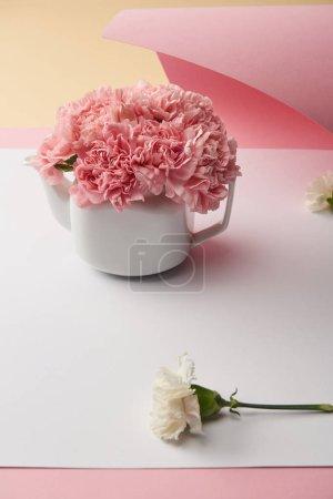 Foto de Vista cercana de hermosas flores claveles rosa tiernos en tetera blanca - Imagen libre de derechos