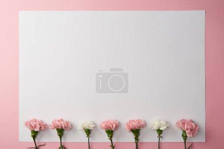 Photo pour Vue du dessus de belles fleurs d'oeillet rose et blanc et carte blanche sur fond rose - image libre de droit