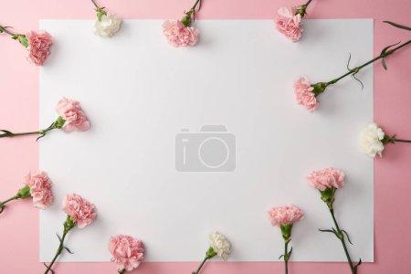 Photo pour Vue du dessus de belles fleurs d'oeillet et carte blanche sur fond rose - image libre de droit