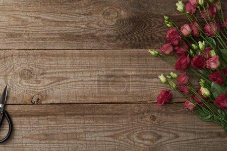 Foto de Vista superior de eustoma tierno hermoso flores y tijeras sobre fondo de madera - Imagen libre de derechos