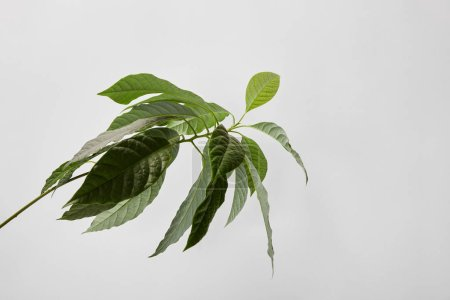 Photo for Selective focus of green plant on grey background - Royalty Free Image