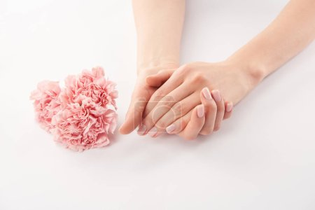 Photo for Partial view of female hands and carnations flowers on white background - Royalty Free Image