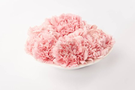 Photo for Pink carnations flowers in round plate on white background - Royalty Free Image