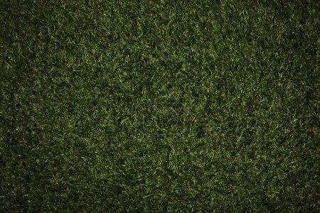 Photo pour Vue de dessus d'un champ avec une herbe verte - image libre de droit