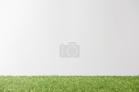 fresh bright green grass on white background with copy space