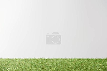 Foto de Fresca hierba verde brillante sobre fondo blanco con espacio de copia - Imagen libre de derechos