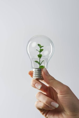 Photo for Cropped view of woman holding light bulb with green plant on white background - Royalty Free Image