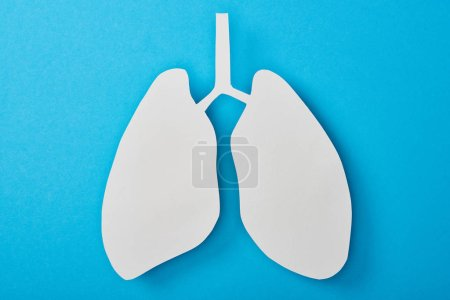 Photo pour Vue du dessus de poumons blancs vides modèle isolé sur bleu - image libre de droit