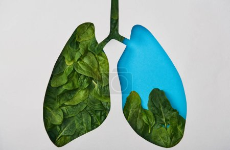 Photo for Top view of blue lungs model with leaves isolated on white - Royalty Free Image