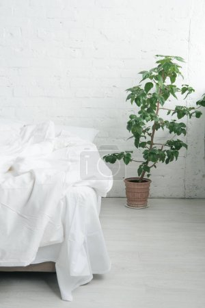 Photo for Bed with white sheets and blanket, green plant - Royalty Free Image