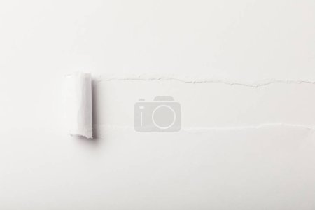 Photo for Torn paper with rolled edge and copy space on white background - Royalty Free Image