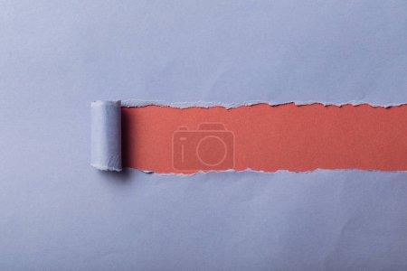 Photo pour Déchiré papier bleu avec bord roulé sur fond rose - image libre de droit