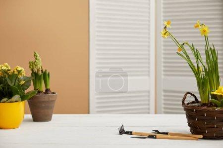 Narzissen, gelbe Blüten und Hyazinthen auf weißem Tisch