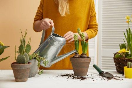 Teilansicht des Gärtners im gelben Pullover, der Hyazinthe im Tonblumentopf gießt