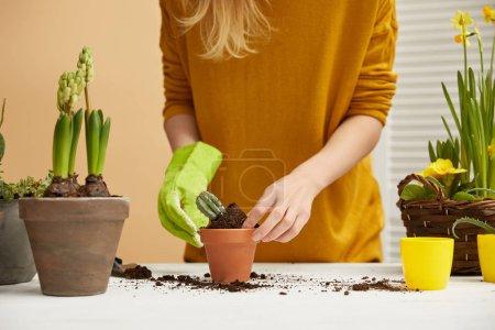 partial view of gardener in yellow sweater planting cactus in flowerpot