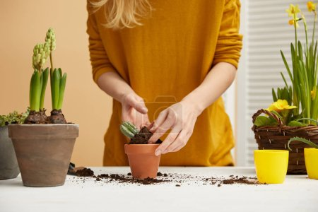 cropped view of gardener in sweater planting cactus in flowerpot