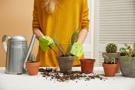 Photo for Partial view of gardener in yellow sweater planting cactus in flowerpot with spade - Royalty Free Image