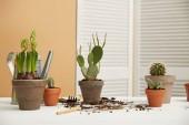 """Постер, картина, фотообои """"кактусы, алоэ и гиацинты в глиняные горшки на белом столе"""""""