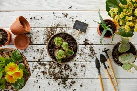 Draufsicht auf Hyazinthe, Aloe und Kaktus auf weißem Tisch