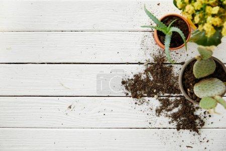 Photo pour Vue de dessus des fleurs d'aloès, de cactus et de jaune sur le tableau blanc avec espace de copie - image libre de droit