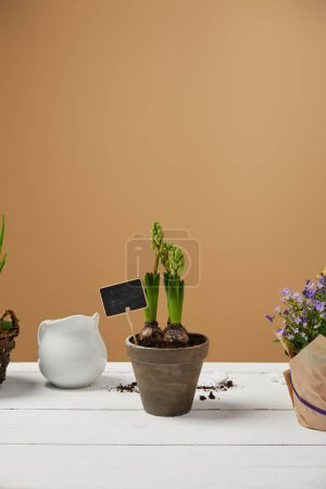Photo for Hyacinth in clay flowerpot with white jug on table with copy space - Royalty Free Image