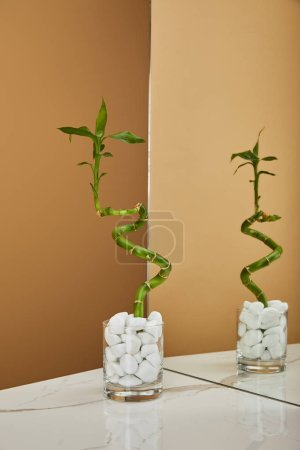green bamboo stem in vase
