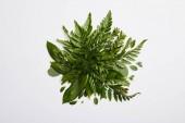 """Постер, картина, фотообои """"состав свежего зеленого папоротника листьев изолированные на сером фоне"""""""