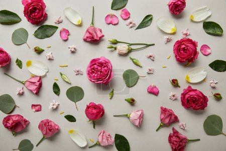 Photo for Floral background made of pink roses, buds, leaves and petals isolated on grey - Royalty Free Image