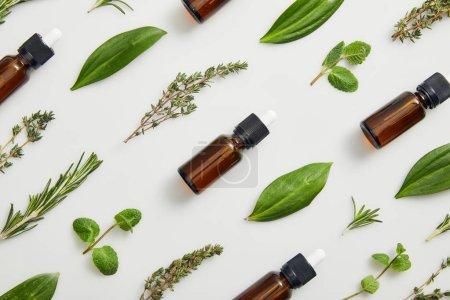 Photo pour Plat poser avec des bouteilles sur les huiles essentielles et herbes vertes sur fond gris - image libre de droit