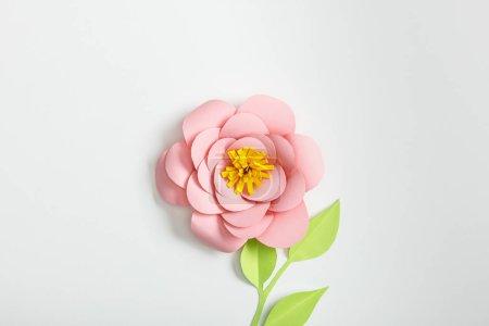 Foto de Vista superior de flor de papel rosa y verde de las plantas con hojas sobre fondo gris - Imagen libre de derechos