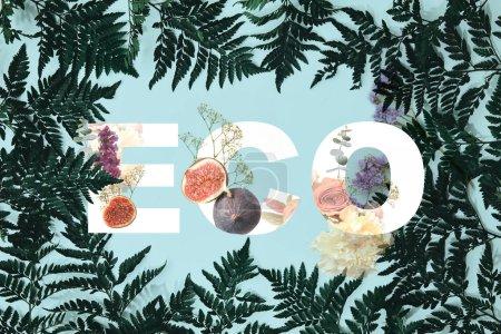 Photo pour Fougère feuilles cadre sur fond bleu avec illustration de fleurs et de figues et lettrage eco - image libre de droit