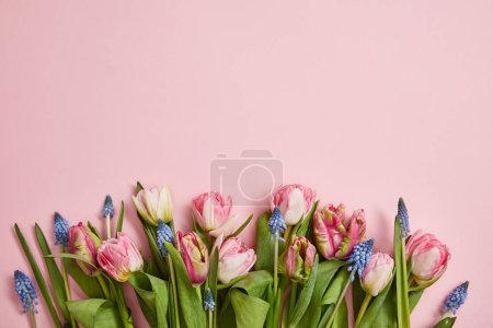 Photo for Top view of fresh pink tulips and grape hyacinths arranged on pink background - Royalty Free Image