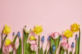 top view of fresh pink tulips, blue hyacinths and yellow narcissus flowers on pink background