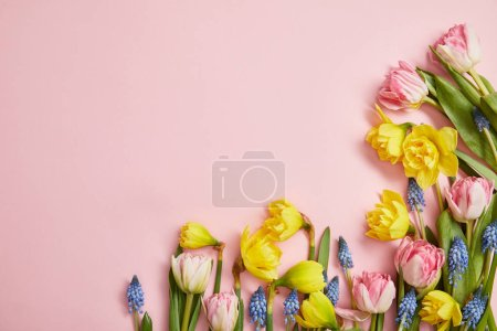 Photo for Top view of fresh pink tulips, blue hyacinths and yellow narcissus flowers on pink background - Royalty Free Image