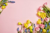 top view of pink tulips, blue hyacinths and yellow daffodils on pink background