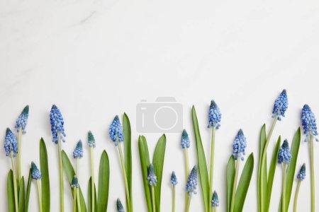 Photo pour Vue de dessus de belles jacinthes disposées horizontalement sur fond blanc - image libre de droit