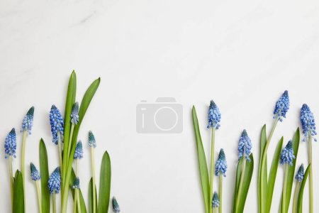 top view of beautiful blue hyacinths with green leaves on pink background