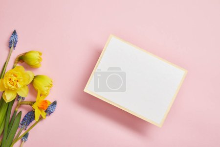 Photo for Top view of white empty card, blue hyacinths and yellow daffodils on pink background - Royalty Free Image