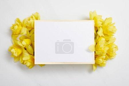 Photo pour Vue du dessus de la carte blanche vide avec des fleurs narcisses jaunes sur fond blanc - image libre de droit