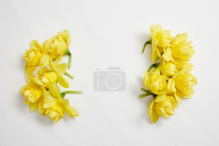 Photo for Top view of yellow narcissus flowers on white background - Royalty Free Image