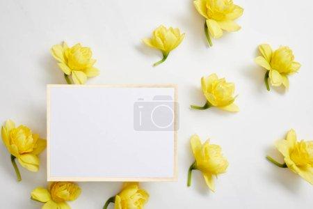 Photo pour Vue du dessus des fleurs jaunes narcisses et carte blanche vide sur fond blanc - image libre de droit