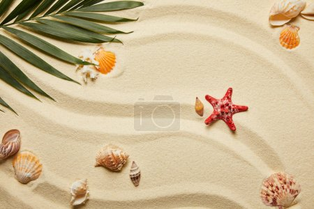 Photo for Top view of red starfish and seashells near green palm leaf on sand - Royalty Free Image