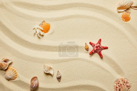 Photo for Top view of red starfish and seashells on sandy beach in summertime - Royalty Free Image