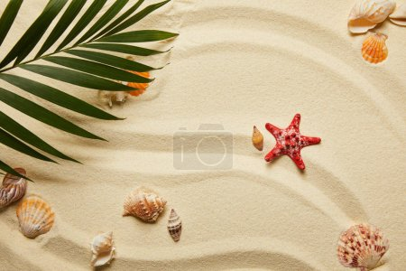 Photo for Top view of green palm leaf near red starfish and seashells on sandy beach - Royalty Free Image