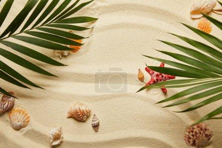 Photo pour Vue de dessus des feuilles de palmier vert près de l'étoile de mer rouge et des coquillages sur la plage sablonneuse - image libre de droit