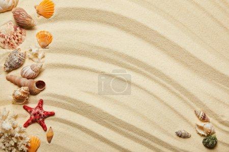 Photo pour Vue de dessus des coquillages, des étoiles de mer rouges et des coraux sur la plage de sable - image libre de droit