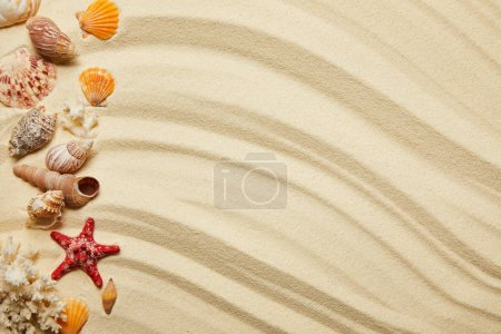 Photo for Flat lay of seashells, red starfish and corals on sandy beach - Royalty Free Image