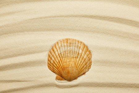 Photo pour Coquillage orange sur la plage de sable courbe en été - image libre de droit