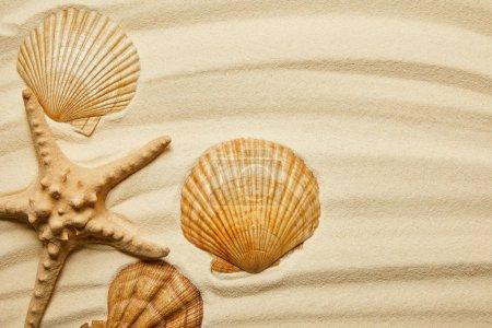 Photo pour Coquillages orange près des étoiles de mer sur une plage de sable fin en été - image libre de droit